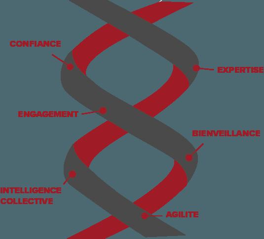 Graphique représentant l'adn d'excellianz